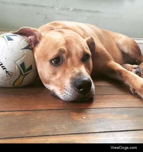 This is Zane, he's just chilling with his ball, you can…