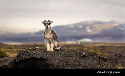 handsomedogs:  handsomedogs:  Handsomedogs' Photography Contest…