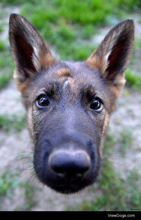 Tomino Contofalsky|Curious puppy