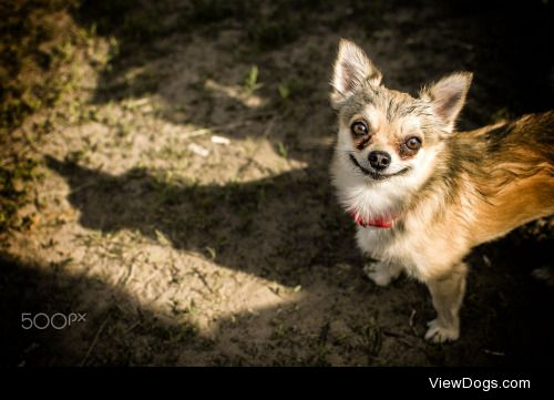 Roman Trapper Shershnev|dog smiley face