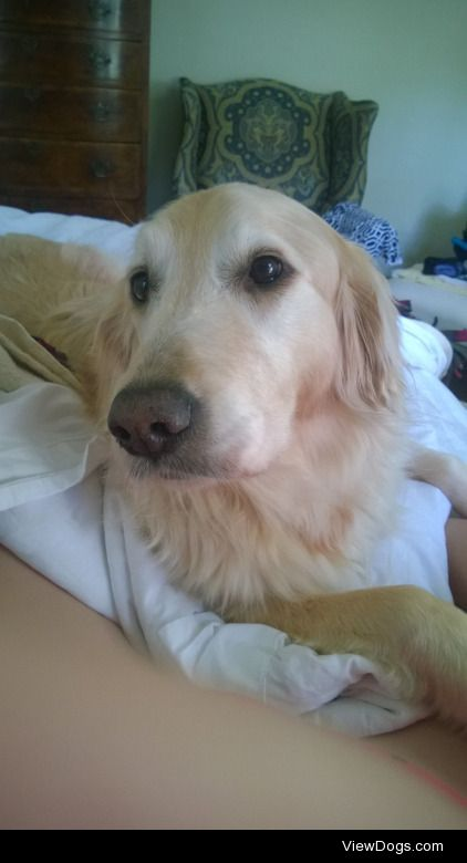 My sweet golden girl Dolly, who sat still long enough for this…