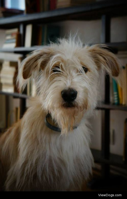 This is Tuwim (named after Polish poet Julian Tuwim). He's a mix…