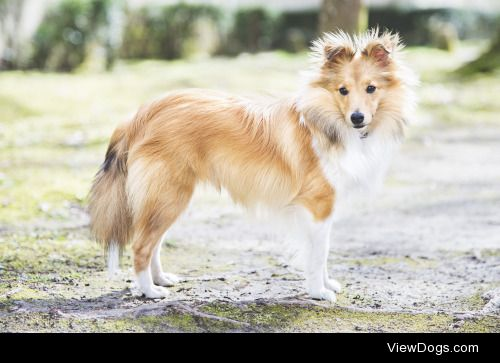 """kandles12  replied to your post """"Remainder that allowing your dog to become obese is just as abusive…"""