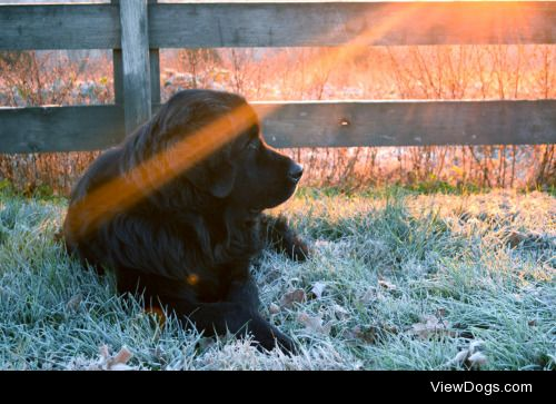 handsomedogs:  Handsomedogs' Photography Contest IXRound 2If…