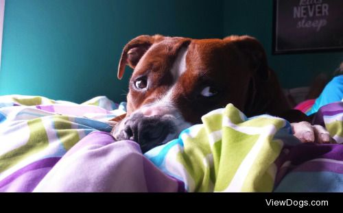 This is my mutt Maggie! She's a pit bull mix that we rescued…