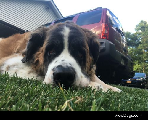 mozart likes laying in the grass