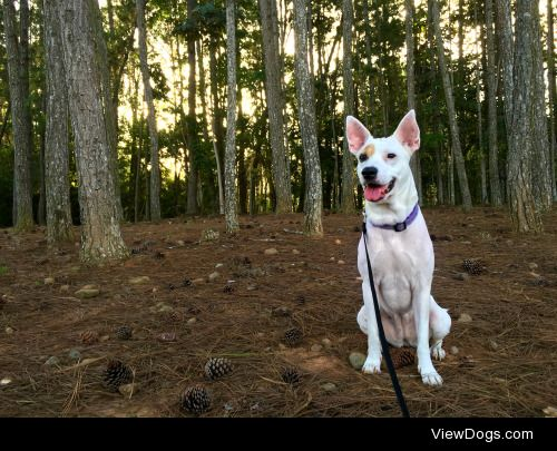 Took Sybil out for a hike – @the-dog-fandom