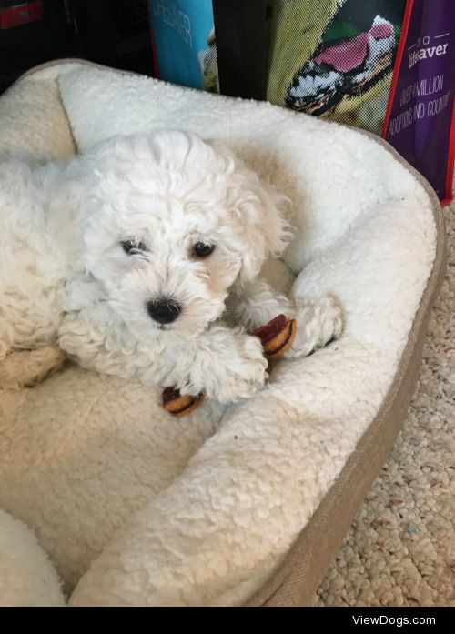 This is my new puppy named Paris he's named after a Star…