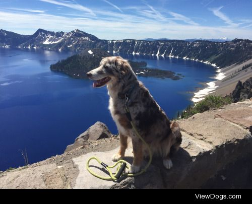 This is my red merle Aussie, Riley, at Crater Lake! His favorite…