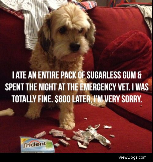 Minty Fresh Breath  My dog ate an entire package of sugarless…
