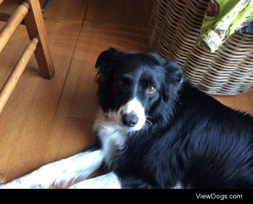 Meet Jasper the border collie, the most photogenic and pat…