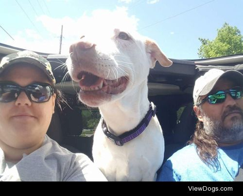 Meet Brandi our 11 year old Pit/Lab mix.  She loves going for…