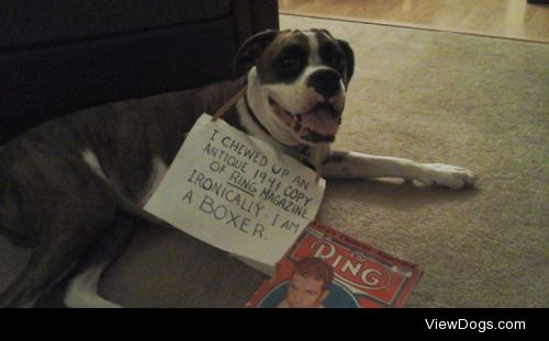 Boxing Fanatic  Our boxer Ralph chewed up his dad's 1941…