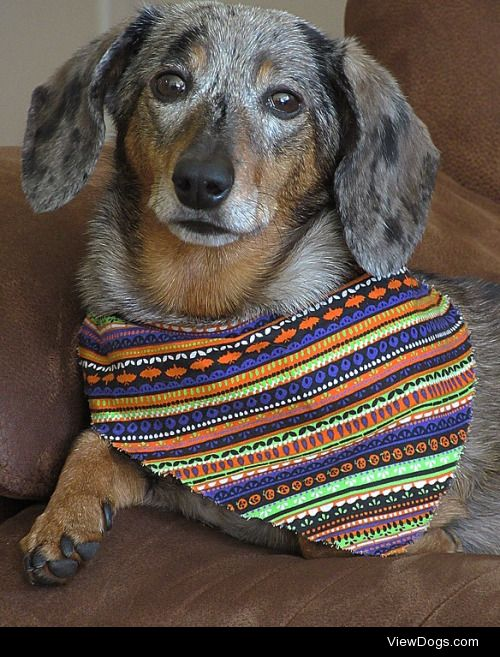 This is Abby! She turned 7 years old this October!-…