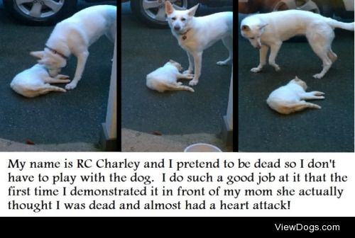 Playing Possum  RC Charley is a 3 year old rescue cat. Although…