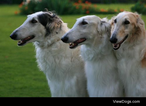 """kiwihounds:  Three 3-year old girls from Mayvale's""""X""""…"""