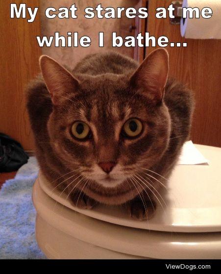 I'm a Creep, I'm a Weirdo…  My cat stares at…