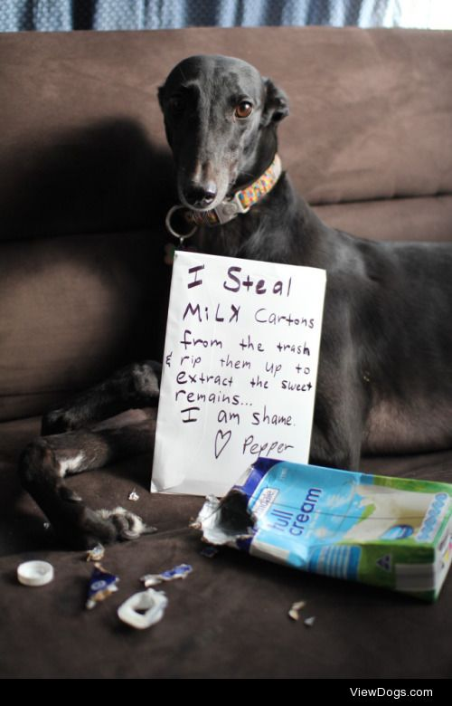 Greyhound Garbage Gross  Pepper, my housemate's rescue…