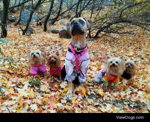 Happy fall y'all!   From left to right: Willow, Aspen,…