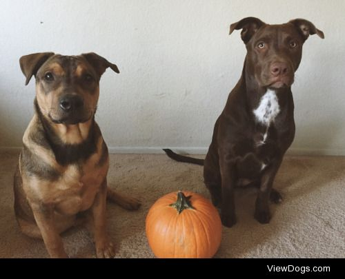 Icarus and River's first Halloween!!