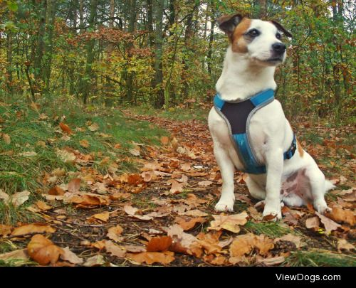 Tabasco, 7yo, JRT has a lot of patience for my photographic…