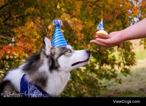 huskiesadventures:  Happy 4th Barkday to this handsome floofy…