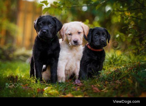 Kerstin Benz -Fotografie The 3 Musketeers