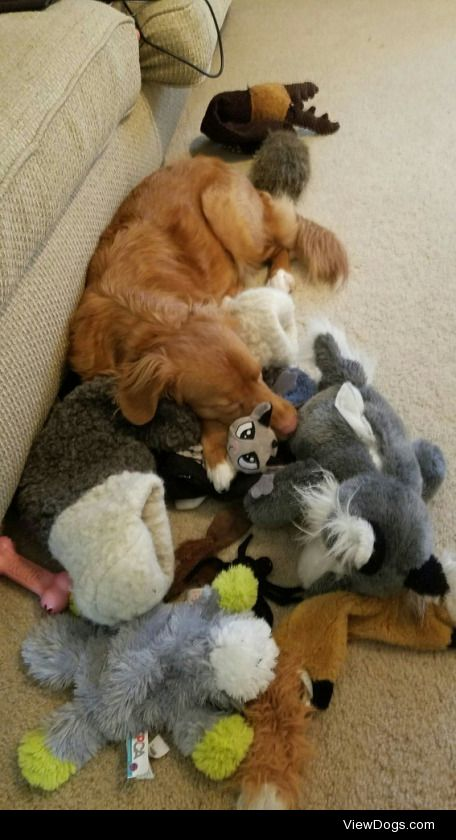 Reblog this with a picture of all your dog's toys!