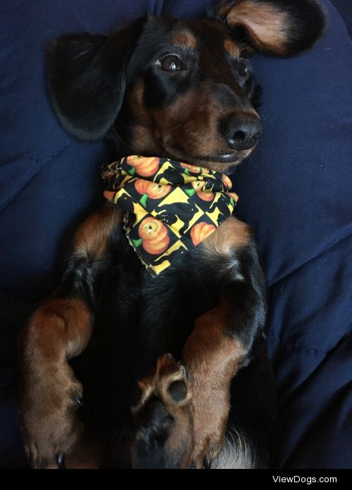 Barry (Bare Bones) will have his first Halloween this year, and…