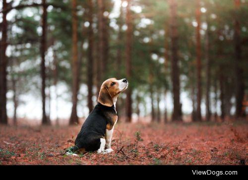 Anna Averianova sweet puppy