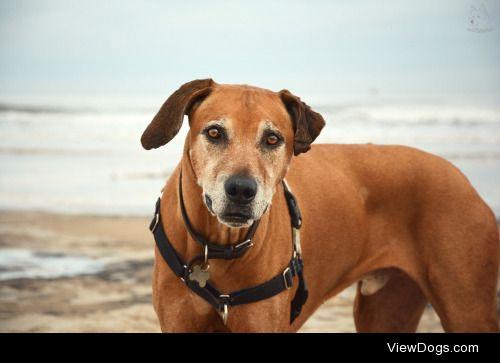 lunaofthenorthwind:Jenga's the most well traveled dog I know;…