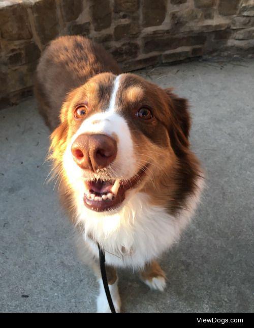 dogsignalfire:  SMILE BOUT UR WEEK