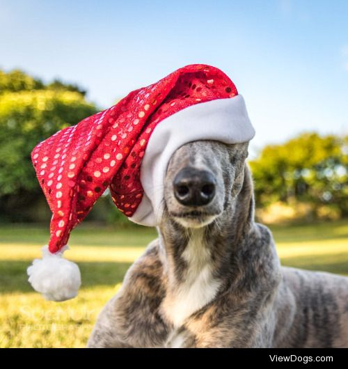 Handsomedogs' Holiday Contest IIIFinalsWe've made it! Here are…