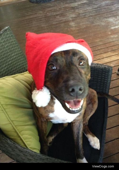 Christmas Kaos from two years ago! He wishes everyone a merry…