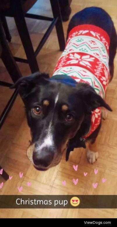Penny loves her new Christmas sweater! She's a very fun…