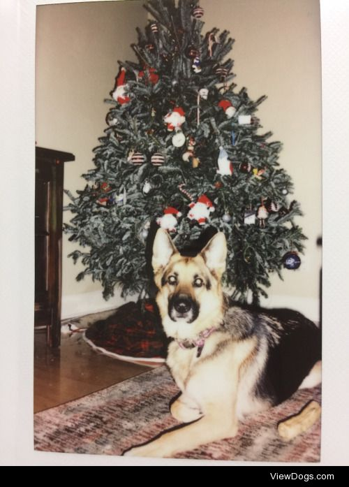 Merry Christmas from Luna   – silenceisgoldenn-