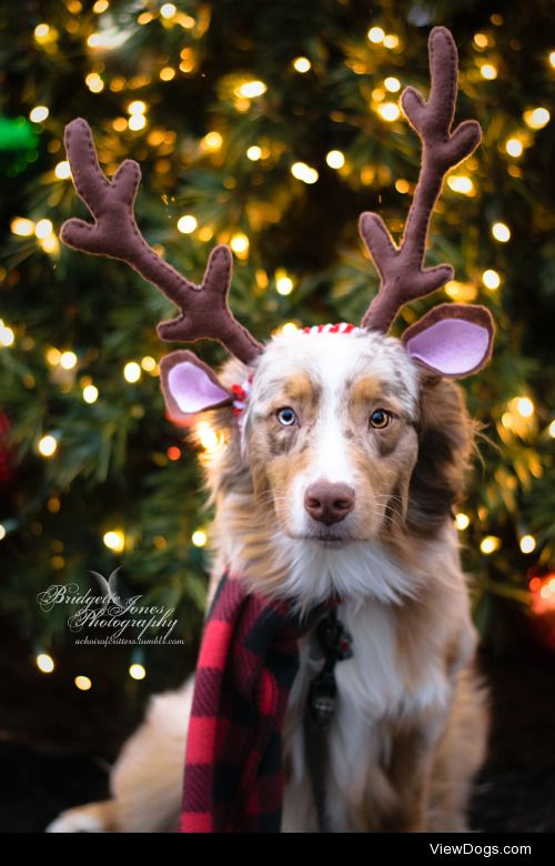 achoirofcritters:  Guess what we did today??? Christmas…