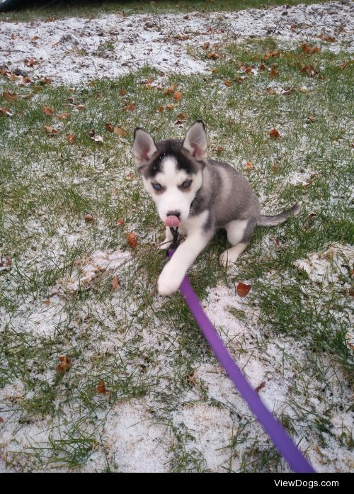 Our newest puppy Saibra. She's 9 weeks old and loves the…
