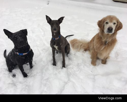 ❄️Bauer • Gretzky • Ray❄️ Three very happy puppers….