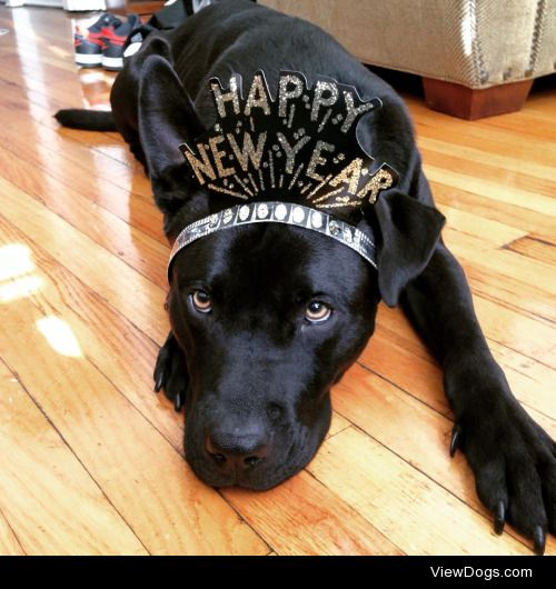 """handsomedogs:  Bauer, formerly known as """"Billy"""" would like to…"""