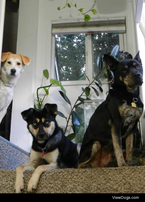 These three are best friends! Comet is a Jindo mix from South…