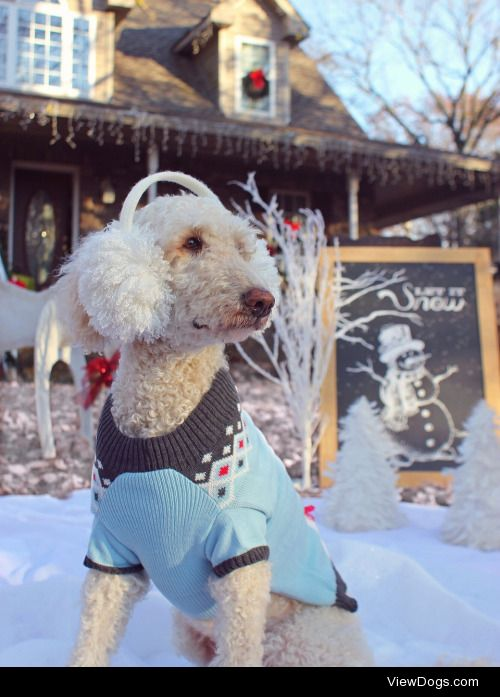 finnydoodles:  Oh the weather outside is frightful But the fire…
