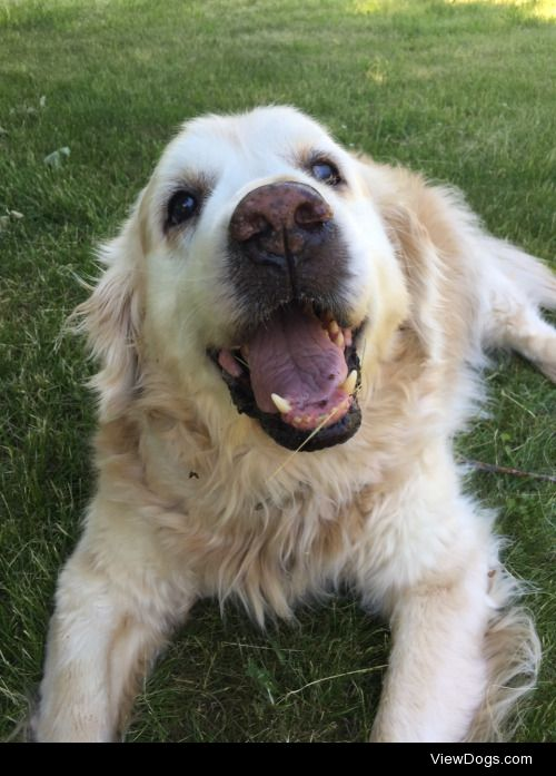 This is Aidan! He's a 10 year old golden retriever who doesn't…