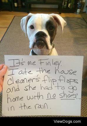 No Remorse  Finley ate the cleaner's flip flop and she had…