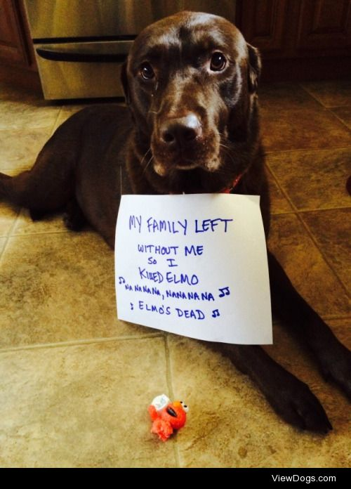 The Sesame Street Killer  Our Chocolate Lab, Abby. She has the…