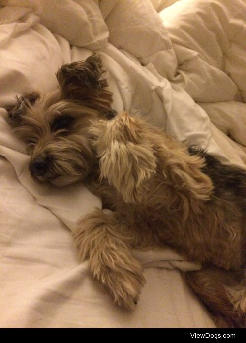This is my pup Maggie! She is a 9 year old terrier mutt. She…