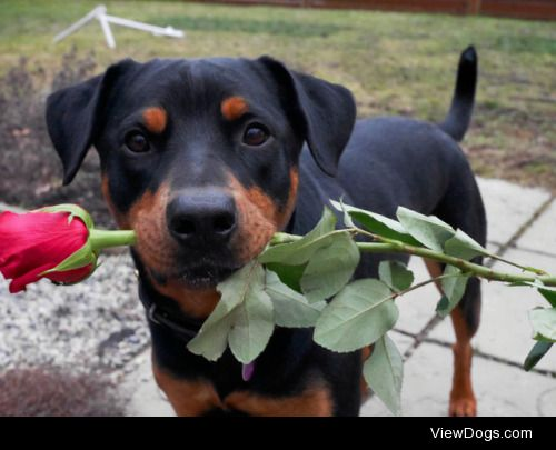 Valentine's Day Contest IIThe winner of the Valentine's Day…