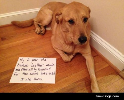Do you Know the Muffin-Dog?  My six year old human brother made…