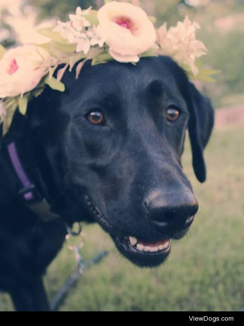 here's Emma wearing a flower crown! she's an energetic 2 yr old…