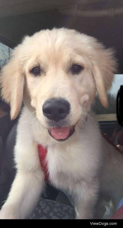 This is Simon, He's 4months old now and he's a…